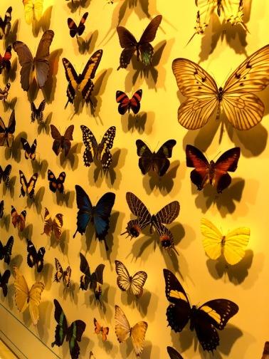 manymuseumbutterflies